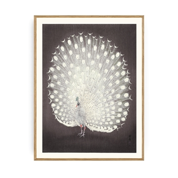 Spliid - Peacock Mud - Plakat - 50x70cm